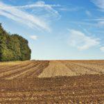 Der Laubmischwald in der Bauleitplanung