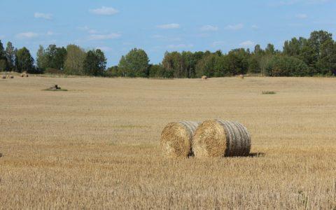 Ethylen-Pipeline-Süd - und die enteignungsrechtliche Besitzeinweisungen in landwirtschaftlich genutzte Grundstücke