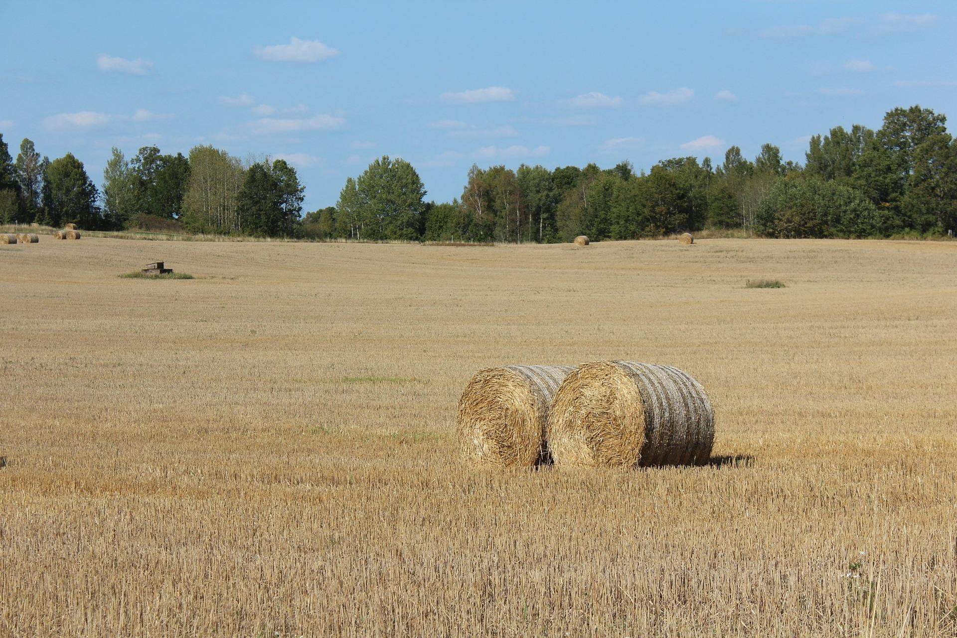 Ethylen-Pipeline-Süd — und die enteignungsrechtliche Besitzeinweisungen in landwirtschaftlich genutzte Grundstücke