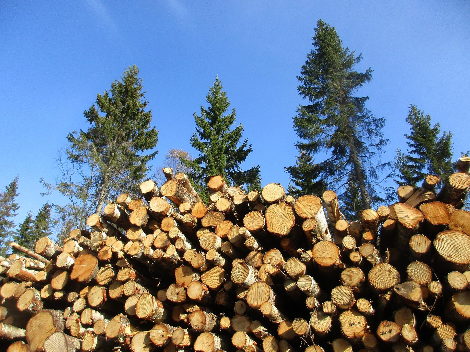 Die Mitgliedschaft in einem Realverband (Forstgenossenschaft) – und ihre Übertragbarkeit