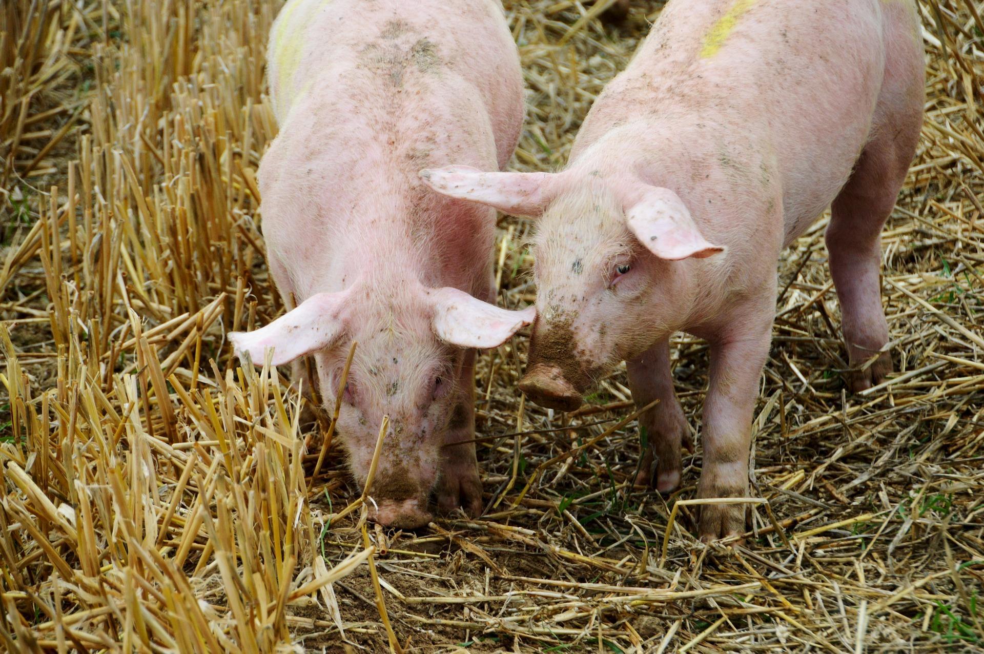 Anti-BSE-Bescheinigung als zugesicherte Eigenschaft