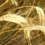 Pfändung einer landwirtschaftlichen Ausgleichszulage in benachteiligten Gebieten