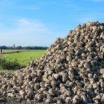 Maulwurfbekämpfung per Buttersäure
