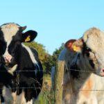 Einzug des Milchlieferrechts - nach Beendigung des Pachtvertrags