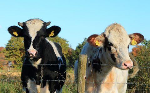 Tierhaltungsgemeinschaft - gewerbliche oder landwirtschaftliche Tierhaltung?