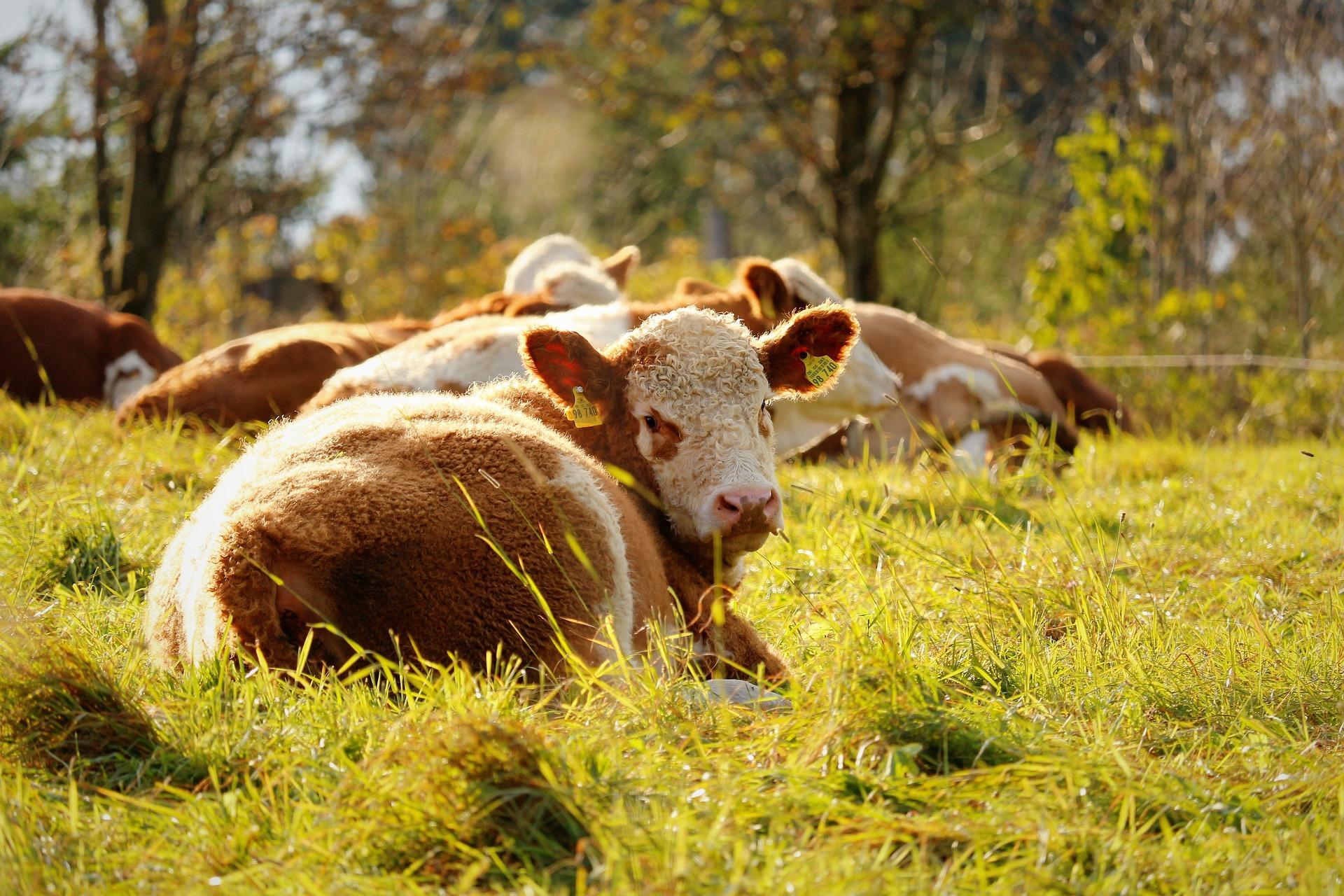 Vertrauensschutz bei der EU-Agrarförderung