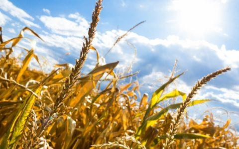 Stundung von Erschließungsbeiträgen für landwirtschaftliche Betriebe (Pensionspferdehaltung)
