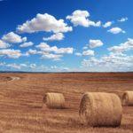 Die grundstücksverkehrsrechtliche Genehmigung eines Grundstück-Kaufvertrages