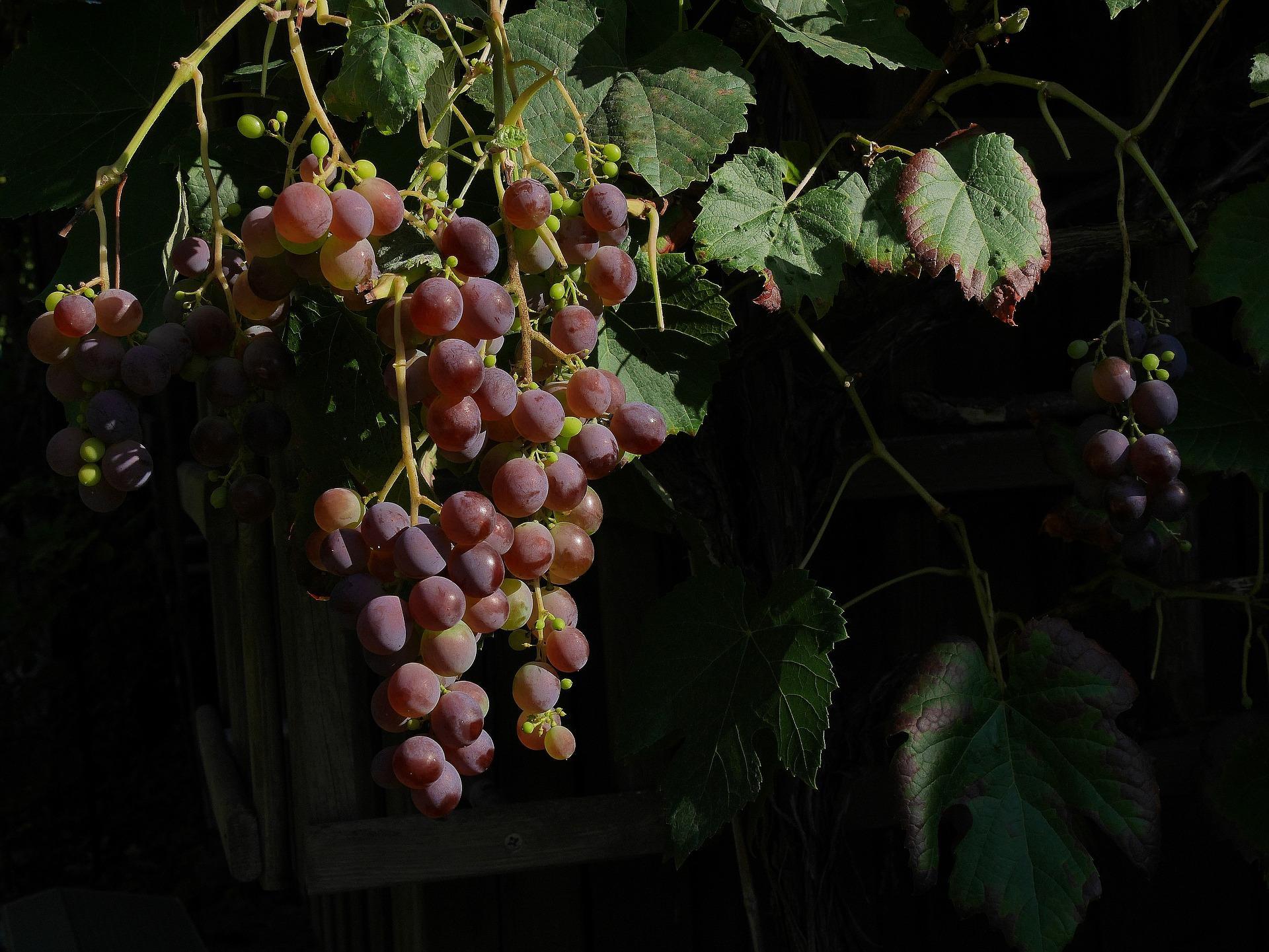 Zwangsweise Förderung des Weinabsatzes