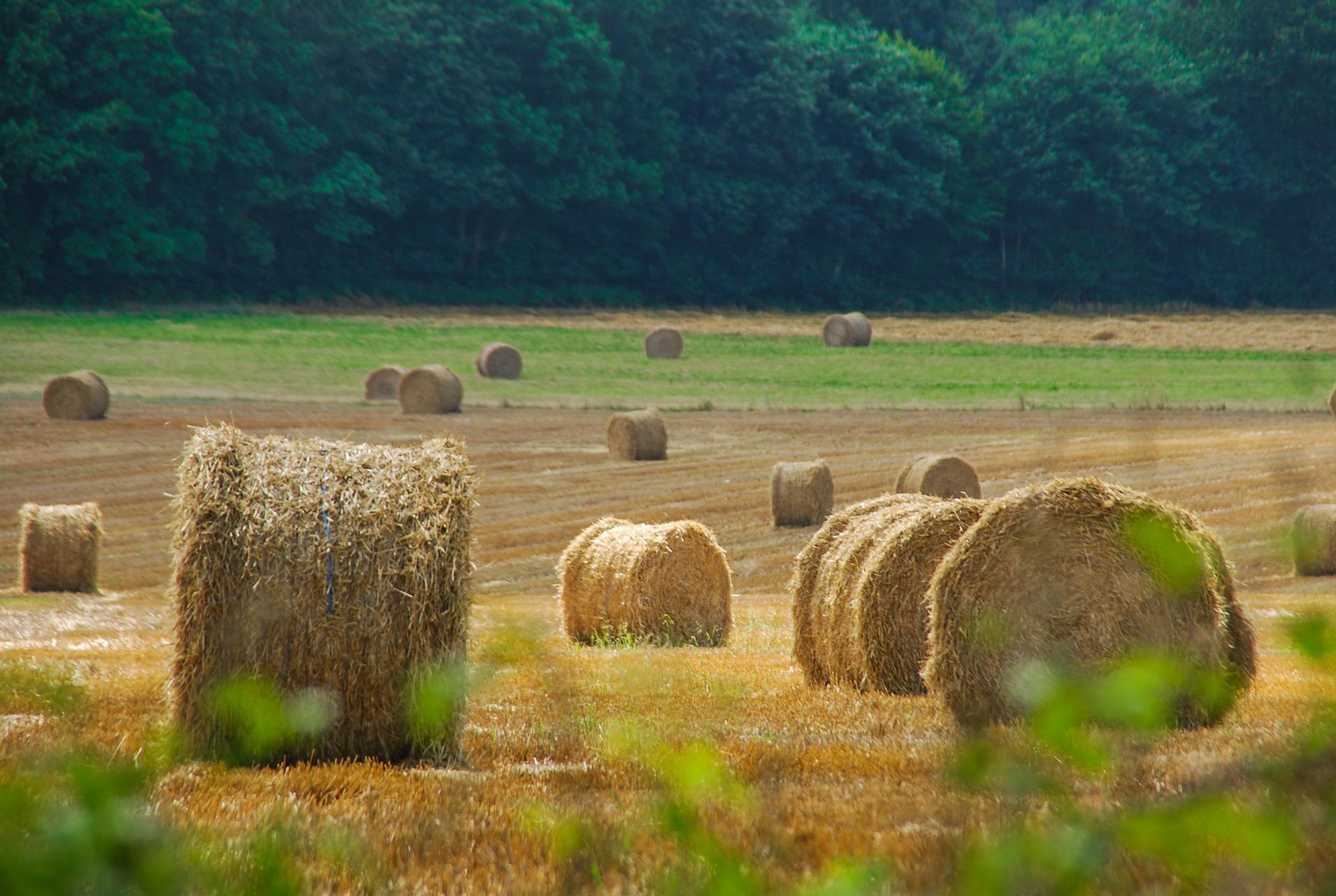 Das für ökologische Ausgleichsmaßnahmen zur Verfügung gestellte Grundstück – und die Umsatzsteuer