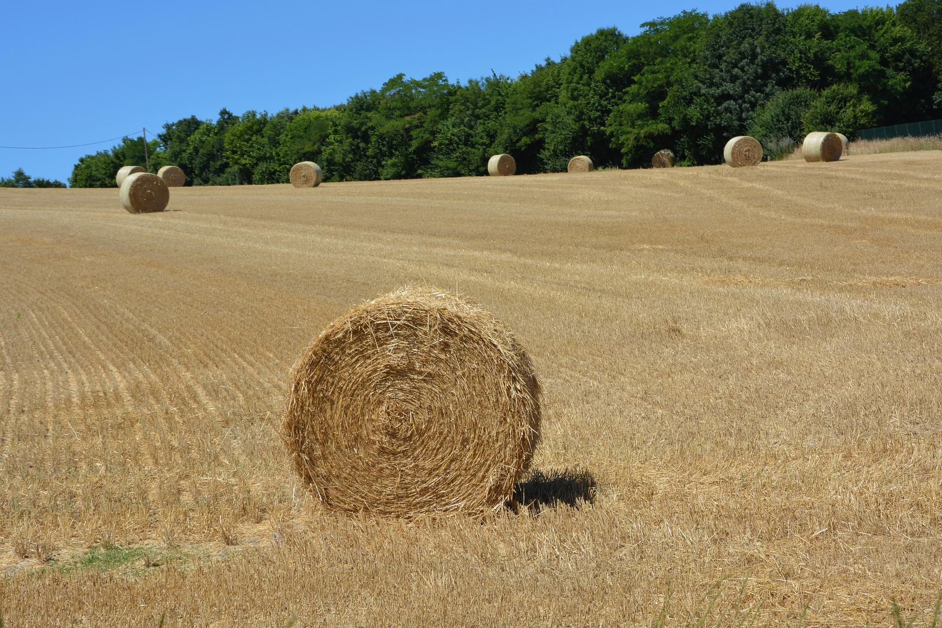 Ungesunde Verteilung von Grund und Boden - der Erwerber als Grundbesitzer