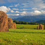 Ungesunde Verteilung von Grund und Boden - Vorratserwerb landwirtschaftlicher Grundstücke