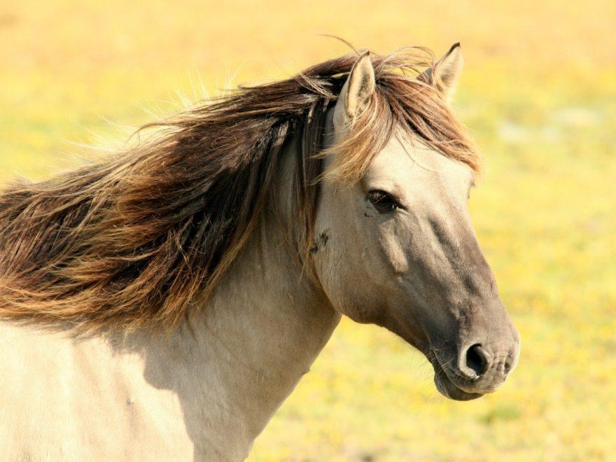 Übertragung einer Pferdepension unter Nießbrauchsvorbehalt - und die generationsübergreifende Gewinnerzielungsabsicht