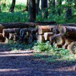 Holzhackschnitzel aus der Forstwirtschaft - und die Umsatzsteuer