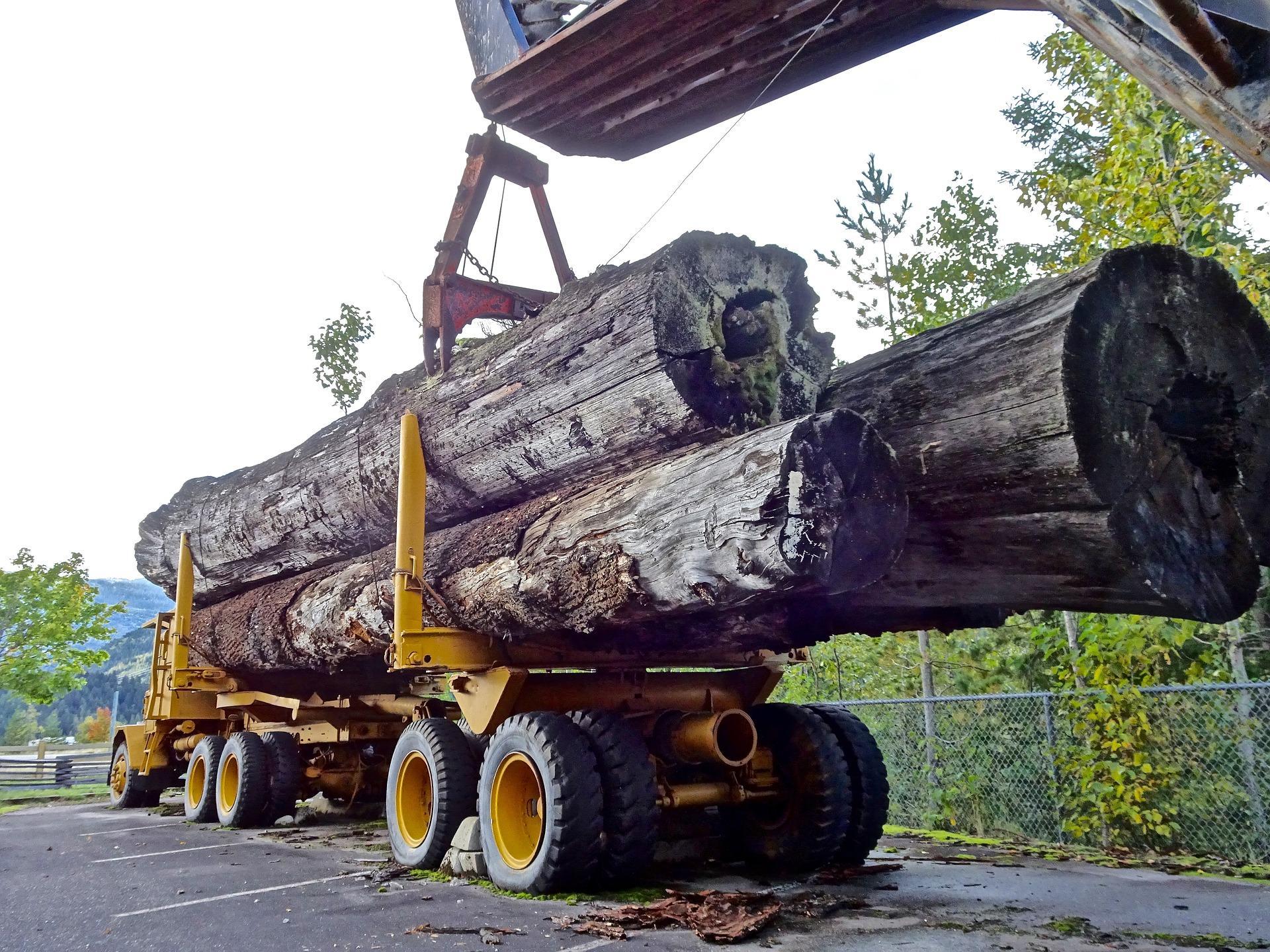 Waldumwandlung — und die Ersatzzahlung für nicht durchführbare Ausgleichsmaßnahmen