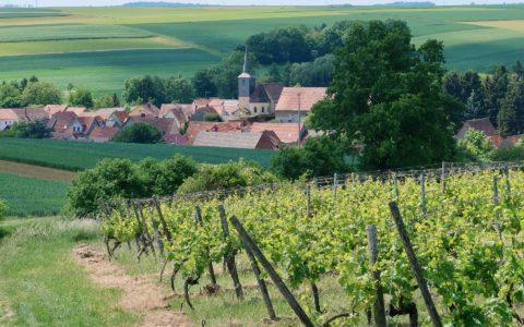 Die Weinkellerei und der Beitrag zur Fremdenverkehrswerbung