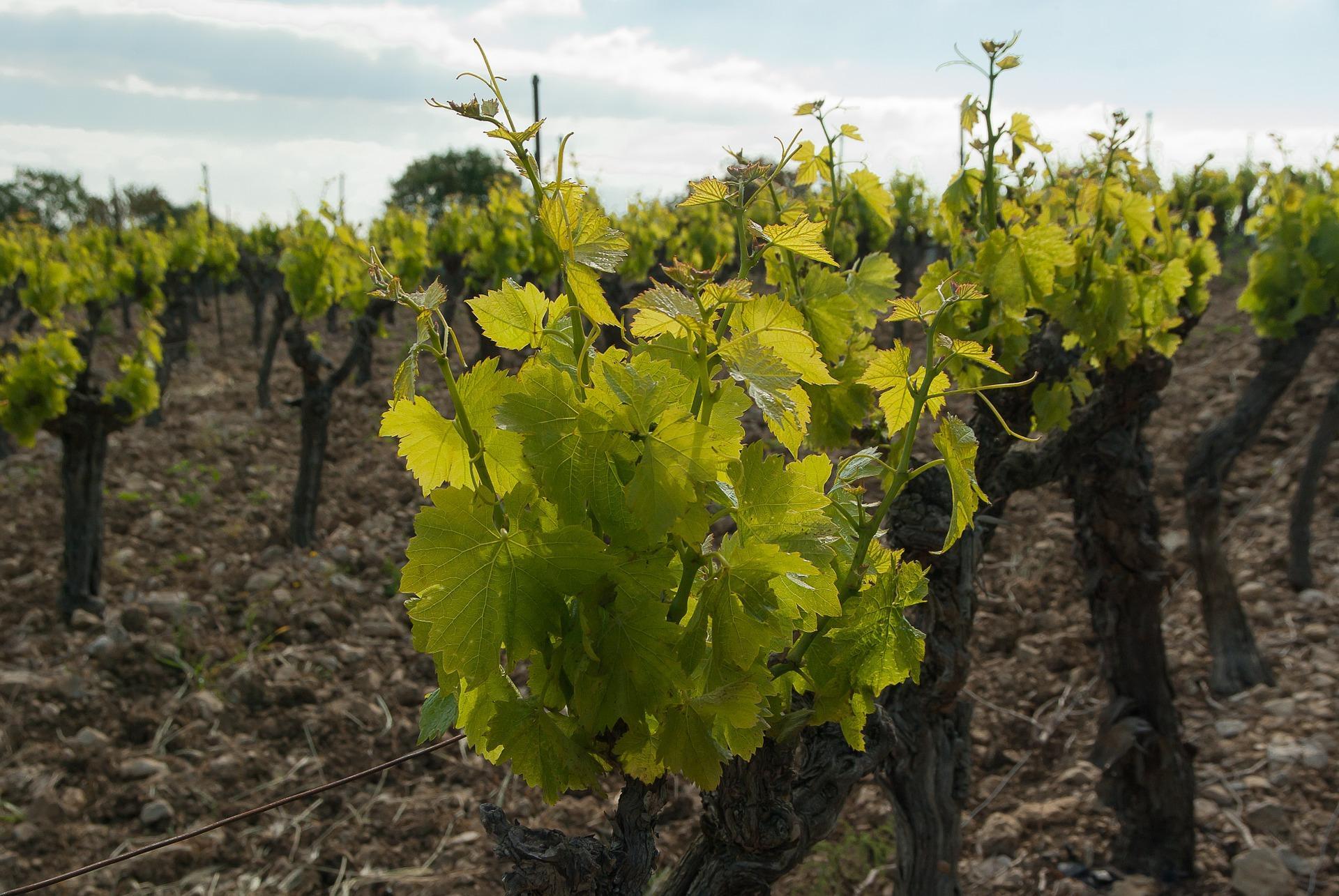 Abgaben für den Deutschen Weinfonds und für die gebietliche Absatzförderung