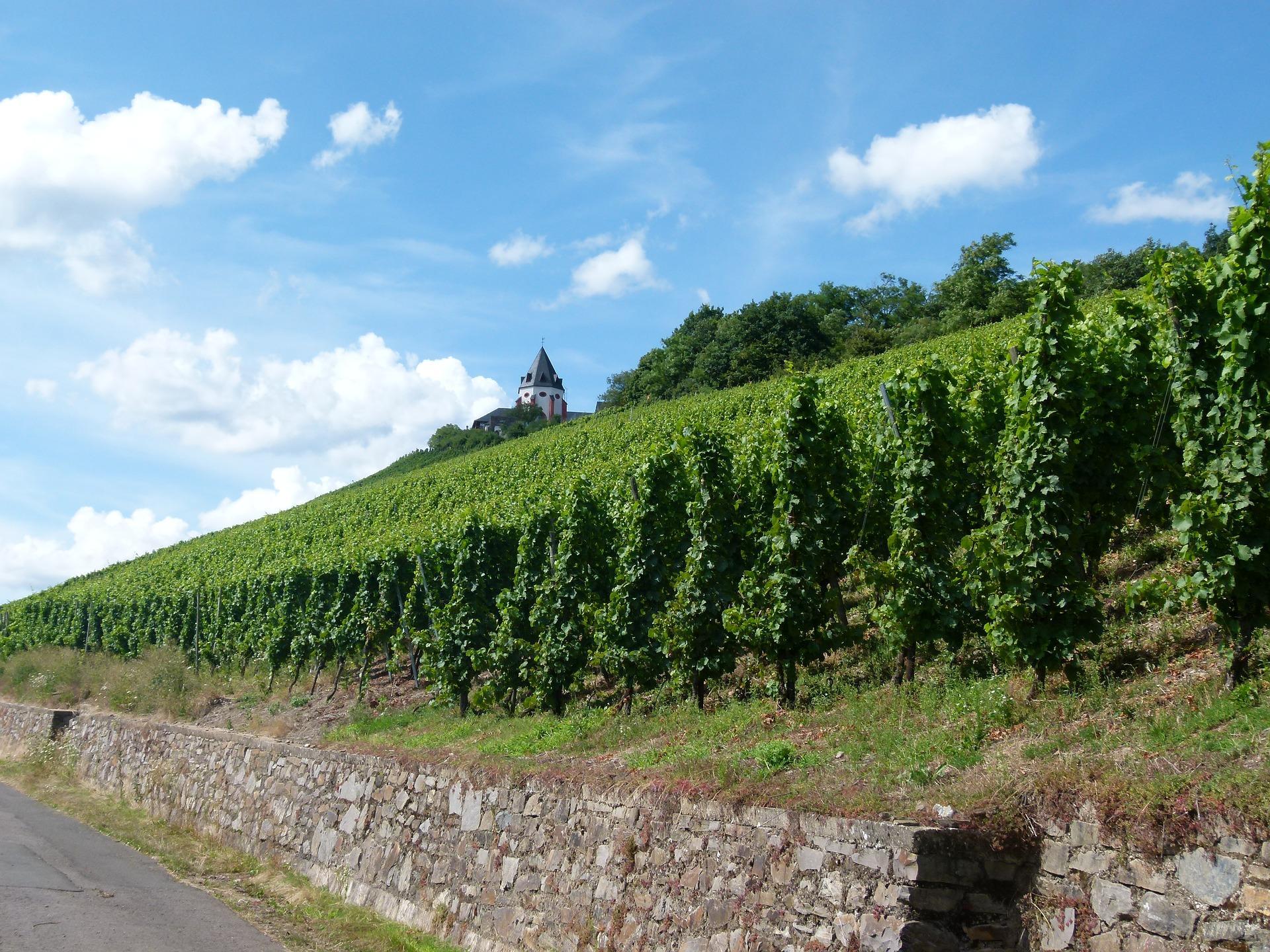Werbeabgaben für die Weinwirtschaft
