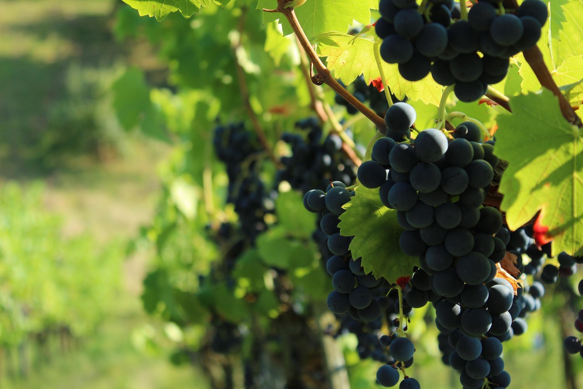 Weinwerbeabgabe