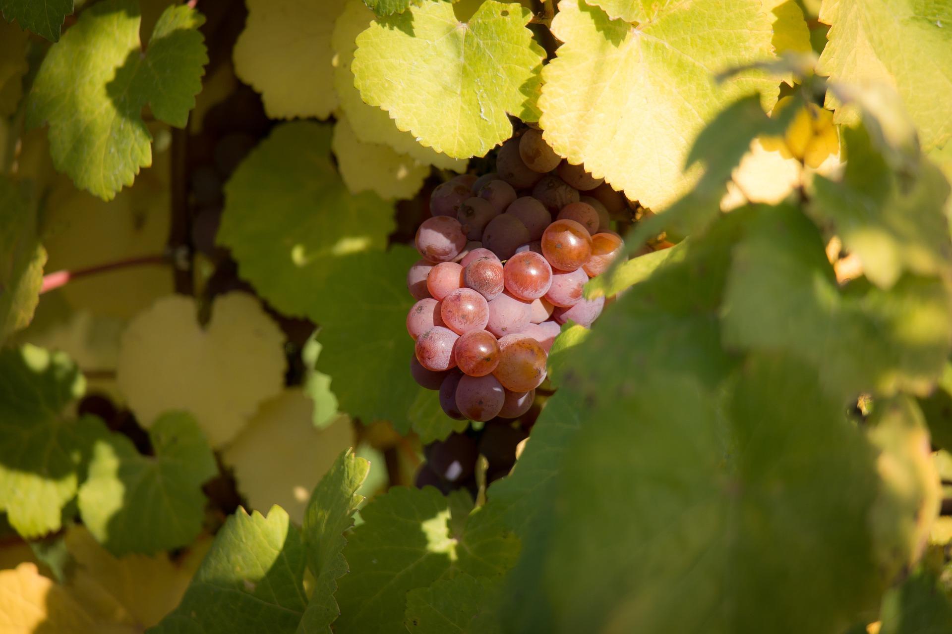 Durchschnittsatzbesteuerung im Weinbau