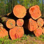 Ersatzlandbeschaffung – und die Privilegierung eines Forstbetriebes bei der Grundstücksverkehrsgenehmigung