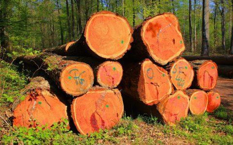 Das Fällen eines Baumes
