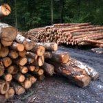 Übertragung eines Forstbetriebs unter Nießbrauchsvorbehalt - und die generationen- und betriebsübergreifende Totalgewinnprognose
