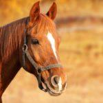 Der  baurechtswidrigen Offenstall für Pferde - neben dem Wohnhaus der Nachbarn